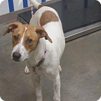 Adopt A Pet :: Daisy - Ottawa, KS