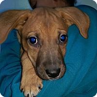 Adopt A Pet :: Liz litter - Pompton Lakes, NJ