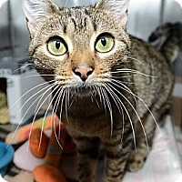 Adopt A Pet :: Persephanie - New York, NY