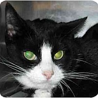 Adopt A Pet :: Silvy-Sue - Lombard, IL