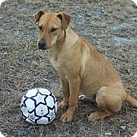 Adopt A Pet :: Fancy - Fort Valley, GA