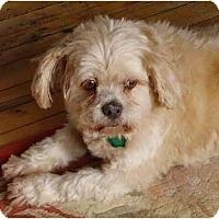 Adopt A Pet :: Harvey - Rigaud, QC