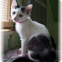 Adopt A Pet :: Judy - Shelton, WA