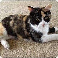 Adopt A Pet :: Cally - Richmond, VA
