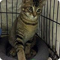 Adopt A Pet :: Jake - Ringwood, IL