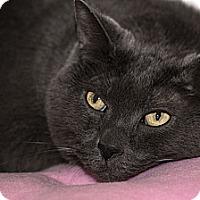 Adopt A Pet :: Janet - Lombard, IL