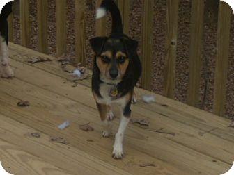 Dachshund/Beagle Mix Dog for adoption in Buford, Georgia - Kin-Z-$150.00