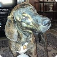 Adopt A Pet :: Remy - Russellville, KY