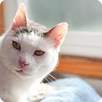 Adopt A Pet :: Sly - Healdsburg, CA