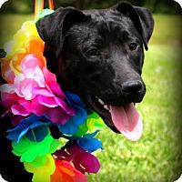 Adopt A Pet :: Milly~ meet me! - Glastonbury, CT