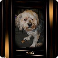 Adopt A Pet :: Milo - Crowley, LA