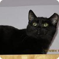 Adopt A Pet :: Scarlet - Quilcene, WA