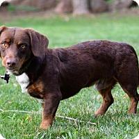 Adopt A Pet :: Teddy - Penngrove, CA