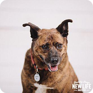 German Shepherd Dog/Labrador Retriever Mix Dog for adoption in Portland, Oregon - Spencer