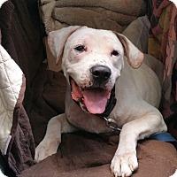 Adopt A Pet :: JACKSON - Boston, MA