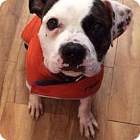 Adopt A Pet :: Winston - Mount Laurel, NJ