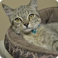 Adopt A Pet :: Dave - Germantown, TN