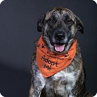 Adopt A Pet :: Bo - Homer, NY