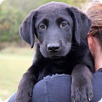 Adopt A Pet :: Freddie - Glastonbury, CT