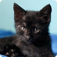 Adopt A Pet :: Mowgli-pending adoption - Manchester, CT