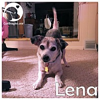 Adopt A Pet :: Lena - Pittsburgh, PA