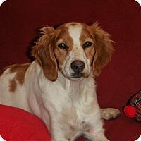 Adopt A Pet :: Loes - Sawyer, ND
