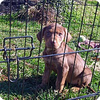 Adopt A Pet :: Gemini - Chalfont, PA