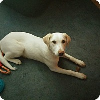 Adopt A Pet :: Zeena - mooresville, IN