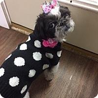 Adopt A Pet :: Muffin - Staten Island, NY