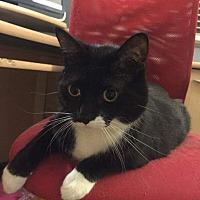 Adopt A Pet :: Tom - Frankfort, IL