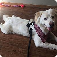 Adopt A Pet :: Oakley - Tomah, WI
