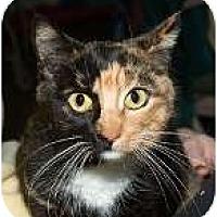 Adopt A Pet :: Lu Lu - Sacramento, CA