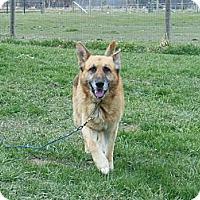 Adopt A Pet :: Ruso - Hamilton, MT