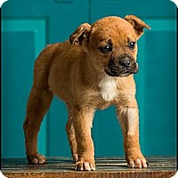 Adopt A Pet :: Leroy - Owensboro, KY