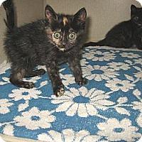 Adopt A Pet :: KIT KAT & REESE - 2012 - Hamilton, NJ