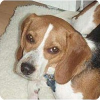 Adopt A Pet :: Aldo - Phoenix, AZ