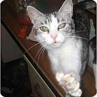 Adopt A Pet :: Maya - Columbus, OH