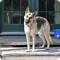 Adopt A Pet :: CABELLA - Hamilton, MT