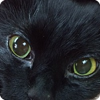 Adopt A Pet :: Dawson - Webster, MA