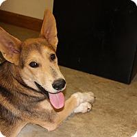 Adopt A Pet :: Leih - Brattleboro, VT