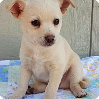 Adopt A Pet :: Espy - Manhattan, NY