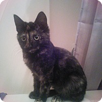 Adopt A Pet :: Lacy - Bentonville, AR