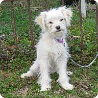 Adopt A Pet :: THUMPER - Hartford, CT