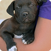 Adopt A Pet :: Floyd - Palmdale, CA