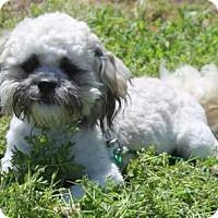 Adopt A Pet :: Vlasic - Palo Alto, CA