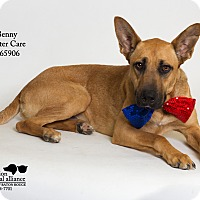 Adopt A Pet :: Benny (Foster) - Baton Rouge, LA