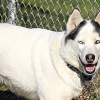 Adopt A Pet :: Lexa - Sycamore, IL