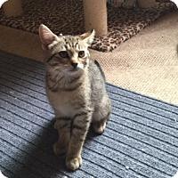 Adopt A Pet :: Winamac - Colorado Springs, CO