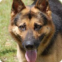 Adopt A Pet :: Chase AD 09-24-16 - Preston, CT