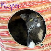 Adopt A Pet :: M'Lynn - Covington, LA